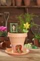My Fairy Garden - květinový domeček Alltoys