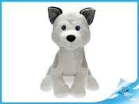 Pes husky sedící 0m+ v sáčku 63cm